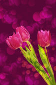 Tulip flowers background — 图库照片