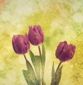 Flores tulipa — Foto Stock