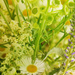 Summer flowers — Stockfoto #27150687