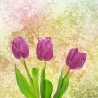 Tulip flowers — Stock Photo #27615307