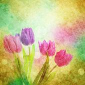 λουλούδια τουλίπα — Φωτογραφία Αρχείου