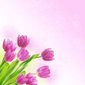 Tulip flowers background — Stockfoto