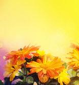 Chrysanthemum blommor bakgrund — Stockfoto