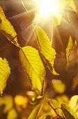 Sonbahar ağaç dalı — Stok fotoğraf