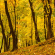 Golden forest — Stock Photo #36358015