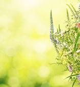Summer meadow flowers — Stock Photo