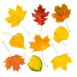 Autumn leaves set — Stock Photo