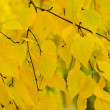 Autumn tree branch — Stock Photo #36788033