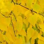 Autumn tree branch — Stock Photo #36788033