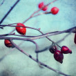 Rosehip berries — Stock Photo #36788143