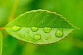 Green leaf — 图库照片