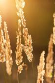 Höstens vintage växter — Stockfoto