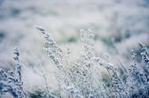 Frozen meadow flower — Photo