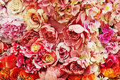 Rose background — Stockfoto