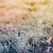 Frozen meadow flower — Stock Photo