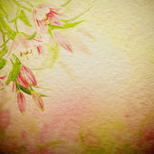 Pink lilies background — Stock Photo