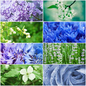 Flower collection — Stock Photo