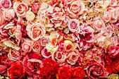 Rose achtergrond — Stockfoto