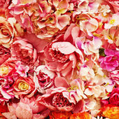 Rose background — Stock fotografie