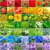 Květinová kolekce — Stock fotografie