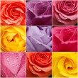 Rose flowers collage — Stock Photo #45936783