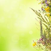 Blommig påsk bakgrund — Stockfoto