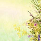 Floral sommer hintergrund — Stockfoto
