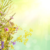 Floral summer background — Stock Photo