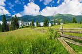Carpathian mountain landscape with tree — Foto Stock