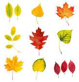 Autumn leaves set — Stock Photo