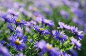 Violetta blommor — Stockfoto