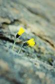 Flowers in rock — Stock Photo