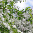 A blooming branch of apple tree in spring — Stock Video #12162437