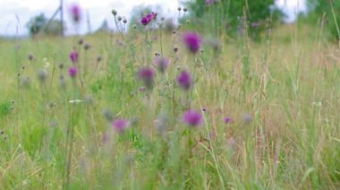 Green meadow — Stock Video
