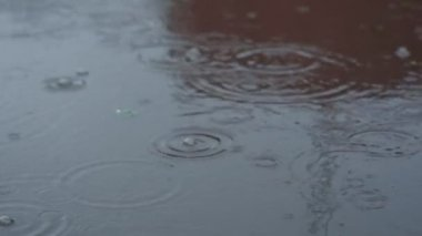 Rain drops rippling in a puddle . — Stock Video
