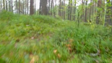 Green foliage in forest . — Stock Video