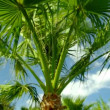 Palm tree against — Stock Video