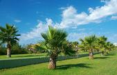 Beauty palm-trees in Antalya — Stock Photo