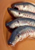Fresh fish lamprey — Stock Photo