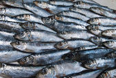 Fresh herring — Stock fotografie