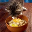 Cat tries Oat porridge — Stock Photo