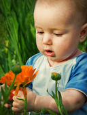 Tot looks at flower — Stock Photo
