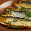 Stock Photo: Smoked herring