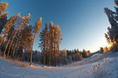 Winter landscape .Winter scene — Stock Photo