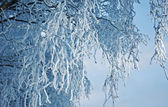Birch trees with hoarfrost on the branches — Stock Photo