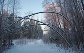 Winter landscape.Winter scene  — Stock Photo