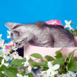 Stock Photo: Kitten in box in flowers