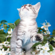 Kitten sits in flowers — Stock Photo #14189659