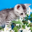 Kitten sits in flowers — Stock Photo #14189685
