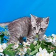 Kitten sits in flowers — Stock Photo #14189971